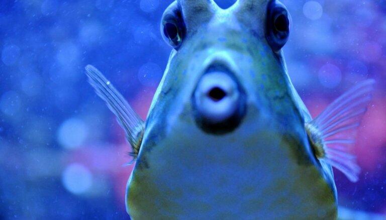 В Румынии пытаются спасти от вымирания древнюю рыбу, которая пережила почти всех