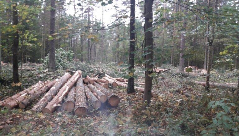 Koku izciršana 30 hektāru platībā Biķernieku mežā notikusi likumīgi, secina VAK