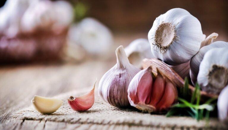 Imunitātes spēcinātājs ķiploks: kāpēc ēst, bet nepārspīlēt
