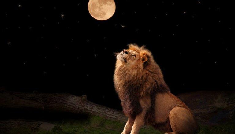 Pilnmēness Lauvā – nedraudzīgs sirds un asinsvadu slimniekiem, draudzīgs darbam ar enerģijām