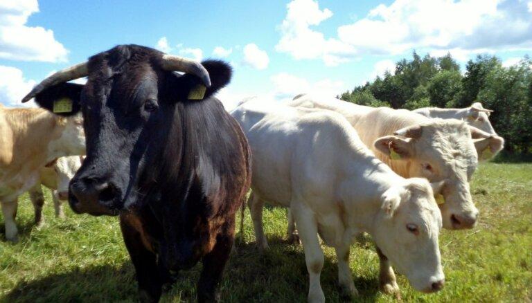 CSP: pērn samazinājies lauksaimniecības dzīvnieku skaits