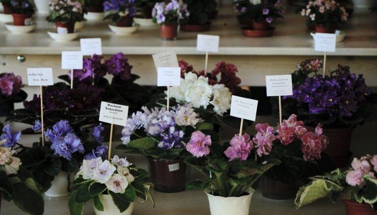 С 23 по 26 мая в Ботаническом саду пройдет выставка сенполий