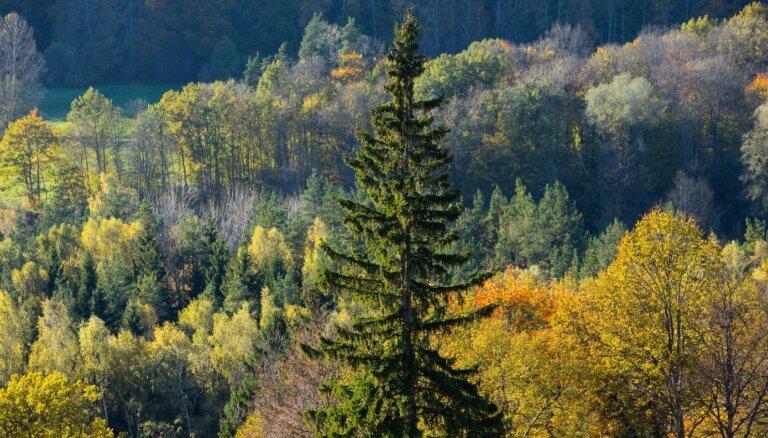 'Latvijas valsts meži' noraida pārmetumus par ierobežotas pieejamības topogrāfisko karšu publiskošanu