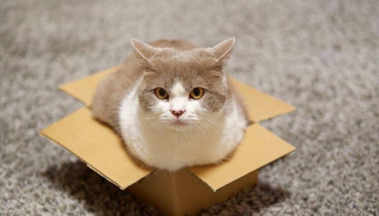 Kaķu zinātne: Pūka un Muris gatavi sēdēt pat iluzorā kastē