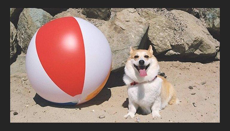 Cūciņa Hamleta un kaķenīte ar saulesbrillēm – populārie 'Instagram' mīluļi