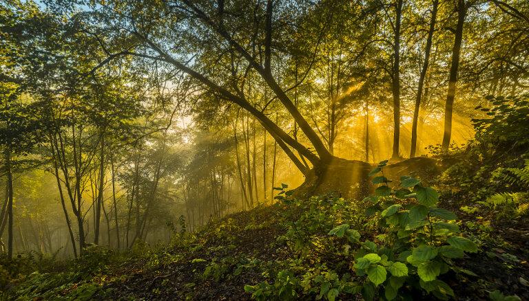 Neparastas idejas brīvdienām: septiņas maģiskas izklaides Lietuvas mežos