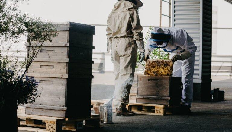 Video: 'Stockmann' jumta bites noslēdz medus vākšanas sezonu