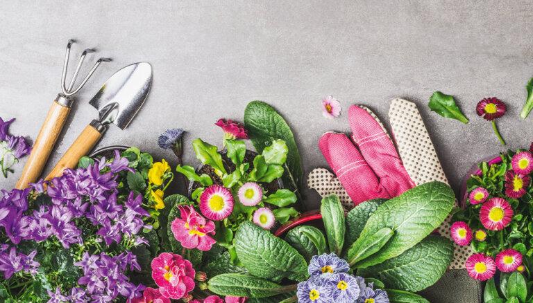 Foto konkurss: Padalies ar sava dārza lolojumu un laimē vērtīgu balvu