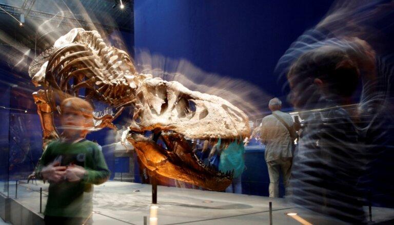 Vai tiranozauri bija lēnīgāki nekā domāts? Nīderlandē veikts aizraujošs pētījums