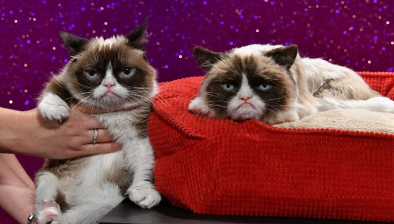 Foto: Nīgrais kaķis ticis pie sava dubultnieka