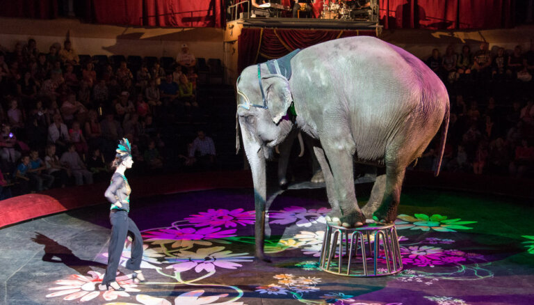 В Латвии запретят использовать диких животных в цирке