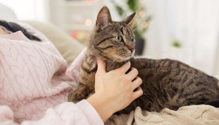 Japāņu pētnieki pierādījuši – kaķi spēj atpazīt savu vārdu