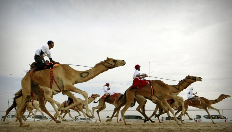 Foto: Kā arābu žokeji ar kamieļiem skrienas