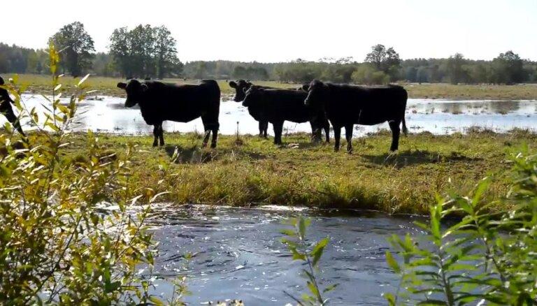 Arī Igaunijā applūduši lauki