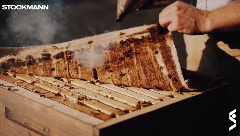 Bites uz 'Stockmann' jumta