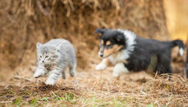 Кинологи опровергли генетическую вражду между кошками и собаками