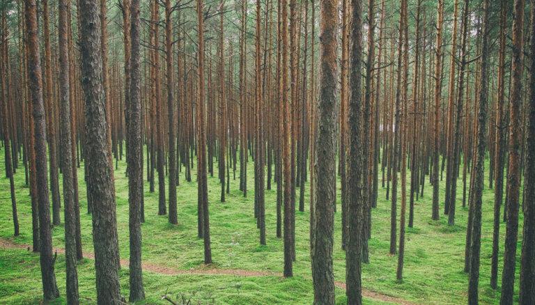 Noticis lielākais darījums ar meža zemēm Latvijā