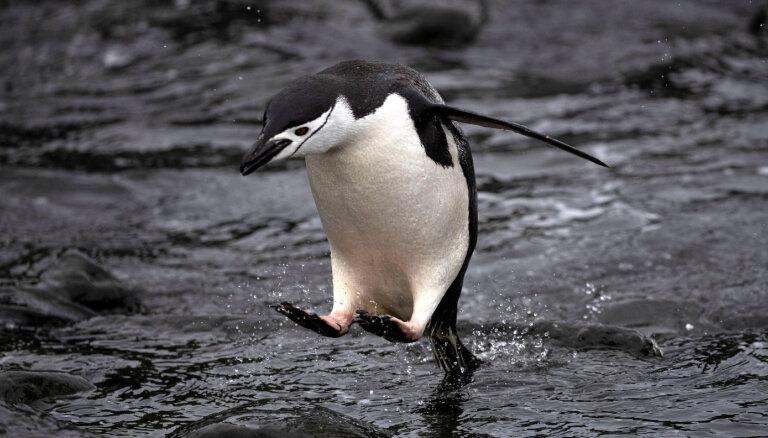 Антарктида: если в начале сезона лед полностью растает, наступит коллапс на всей планете