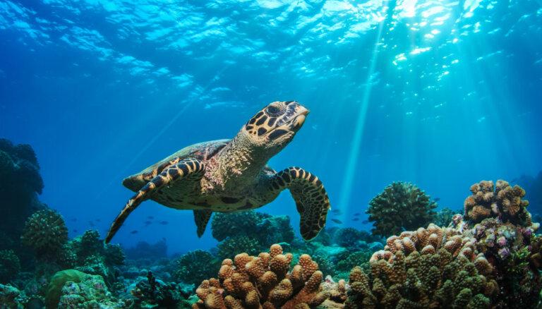 Обхитрить смерть: семь животных, которые живут вечно