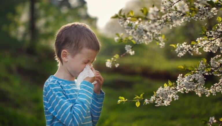 Alerģija pret ziedputekšņiem: kā atpazīt un mazināt izpausmes