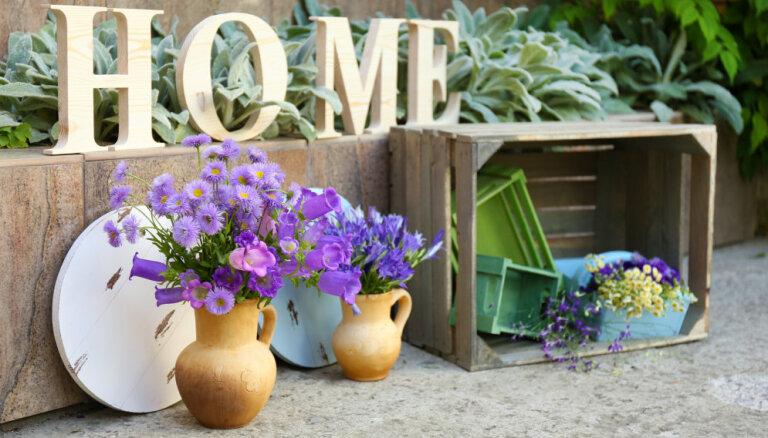 Теплолюбивые гости. Топ-10 садовых растений, готовых перезимовать у вас дома