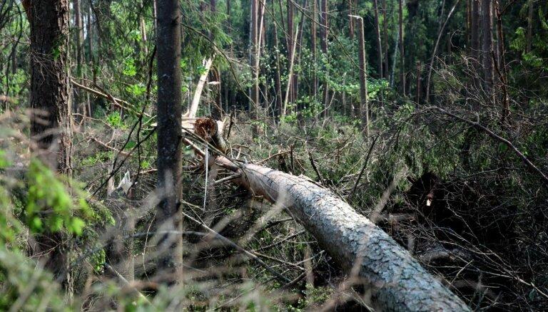 Ornitologs: Veci meži tiešām turpina piesaistīt oglekli