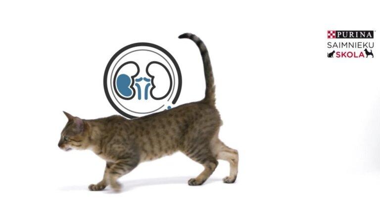 Kā atpazīt kaķa nieru mazspēju