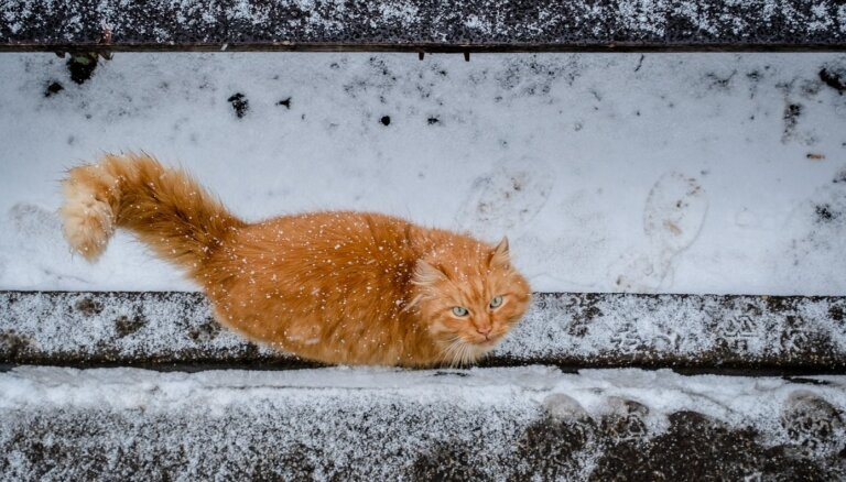 Во вторник ожидается кратковременный дождь, вечером местами - мокрый снег