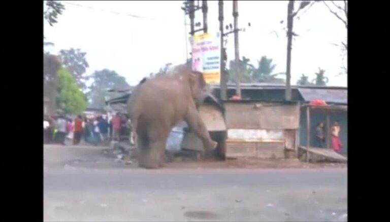Video: Zilonis, trakojot pa Indijas pilsētu, nojauc 100 mājokļus