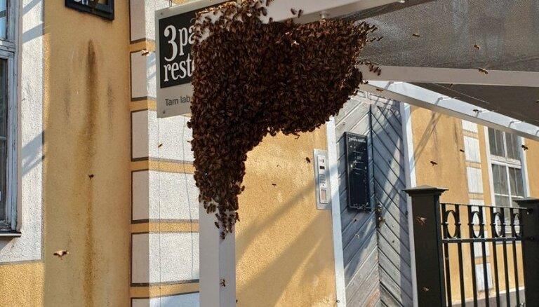 Video: Vecrīgā iemaldījusies bišu saime