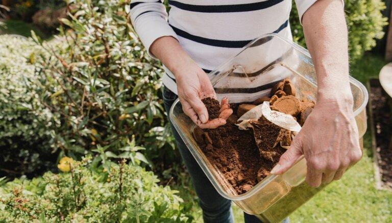 Kafijas biezumi aizkavē augu attīstību un atbaida kaitēkļus, secināts pētījumā