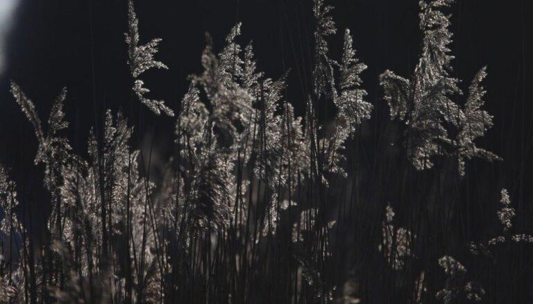 Siguldas novadā naktī izglābj mežā apmaldījušos cilvēku