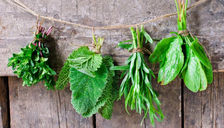 Vitamīnu lādiņš pavasarī: veselīgas un vērtīgas nezāles, ko likt uz šķīvja