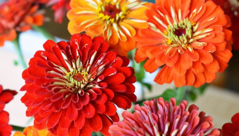 Проще пареной репы: растения, которые легче всего вырастить из семян