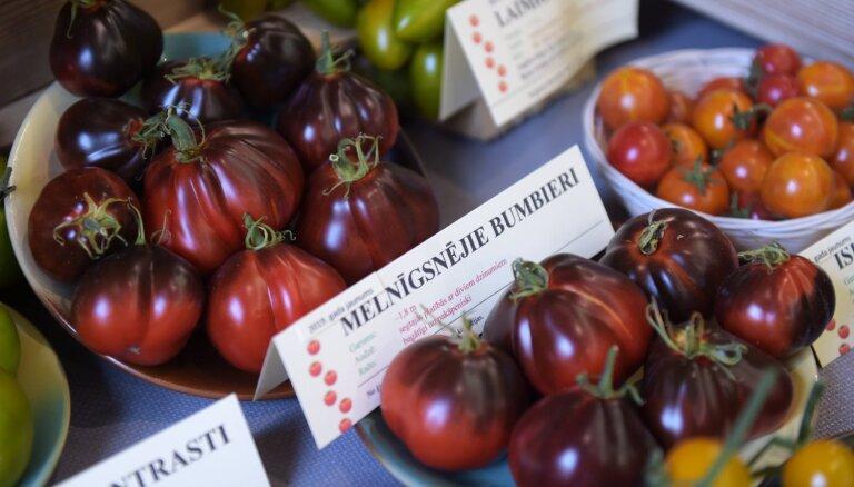 Beverīnas novadā ar izstādi un īpašu alu svinēs tomātu svētkus