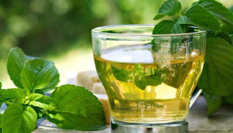 Septiņi augi, kas palīdz stresa mazināšanā