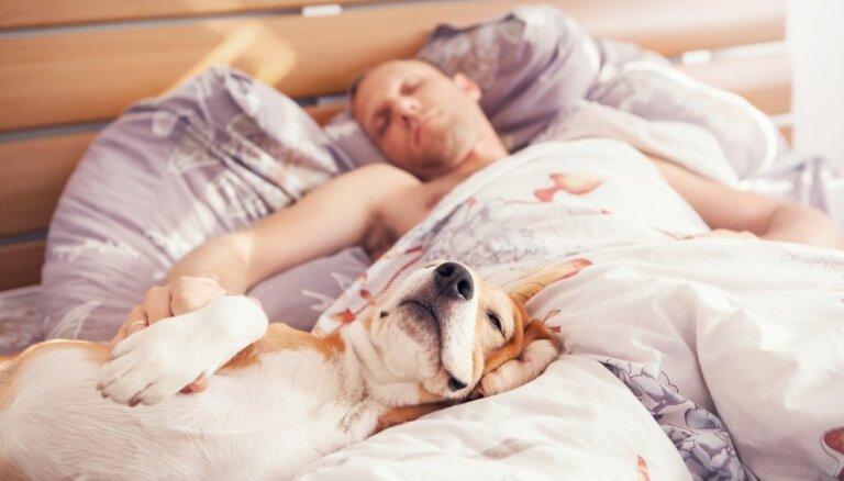 Pētījums: gulēšana kopā ar mājas mīluli uzlabo miega kvalitāti
