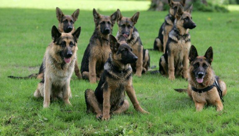 VID skaidras naudas meklēšanas suņi vēl nav uzoduši nedeklarētu naudu
