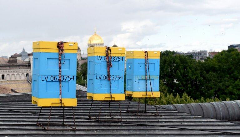 Bišu stropi uz 'Māmuļas' jumta ienesuši 560 kilogramu medus; viens strops – rekordists