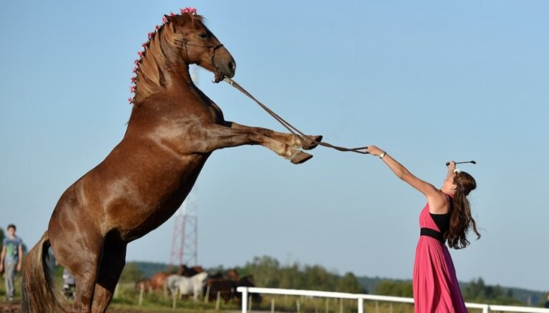 Skaisti zirgi un iespaidīgi jāšanas priekšnesumi 'Prospero' jubilejas ballītē