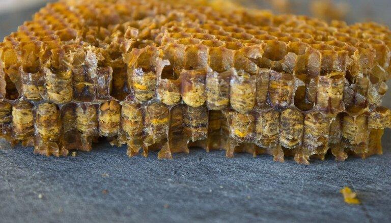 Bišu maize – vietējais 'superprodukts'