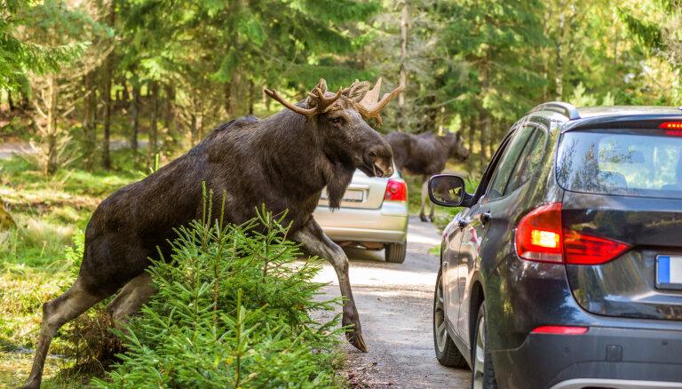 620 аварий за год. С перебегающими дорогу животными будут бороться ультразвуком
