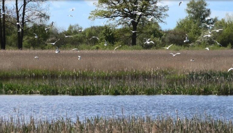 В Рижском порту проведено ежегодное исследование популяции птиц
