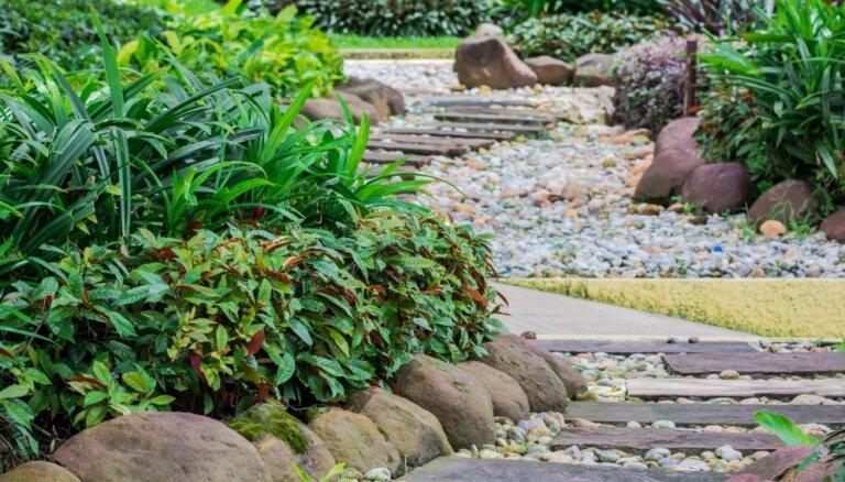 Iedvesmas deva: kā atdalīt takas no puķudobēm dārzā