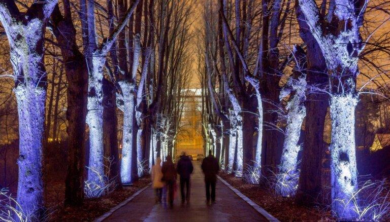 ФОТО: Ботанический сад ЛУ превратился в магический Зимний сад света