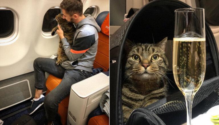 Runča Viktora saimnieks 'apiet' aviokompānijas noteikumus, samainot kaķi