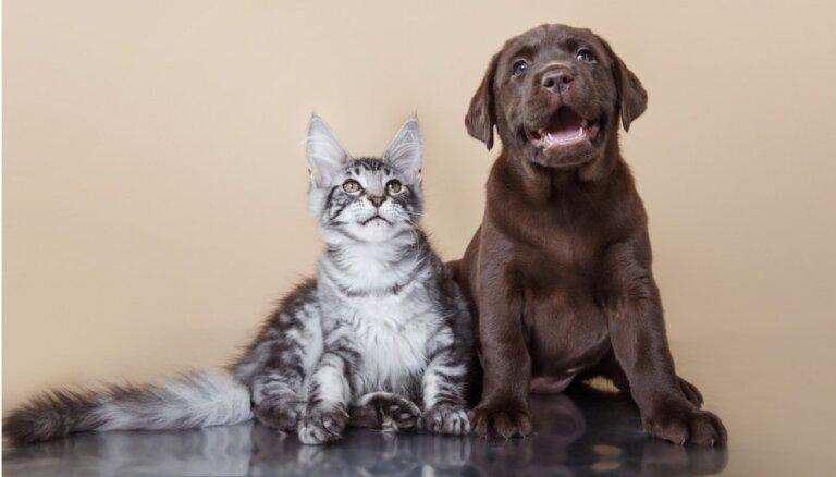 Берем домашнее животное из приюта: 10 советов для будущих владельцев