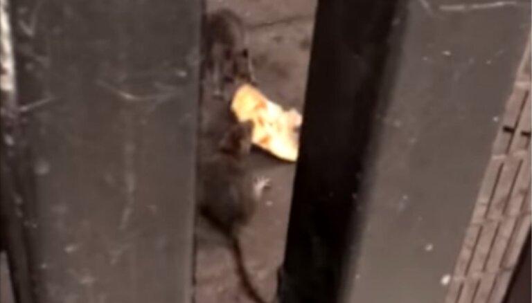 Video: Ņujorkas metro žurkas cīnās par picas gabaliņu
