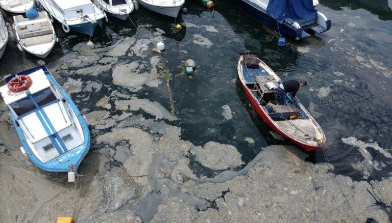 Турция: морская слизь покрыла берега Мраморного моря и угрожает Черному
