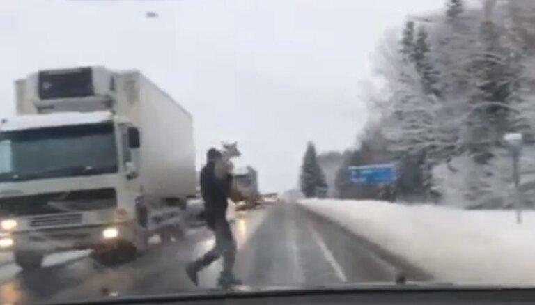 ВИДЕО: Водитель перенес беспомощную косулю через дорогу